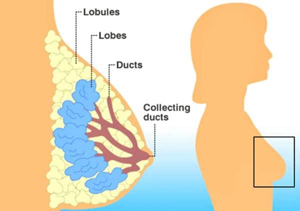 كم يوم يستمر الم الثدي بعد الفطام