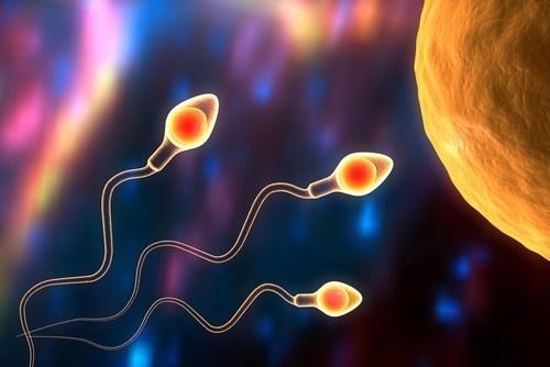 مخزون البويضات ضعيف وصار حمل