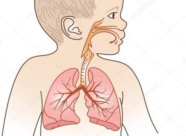 معدل التنفس الطبيعي عند حديثي الولادة 1