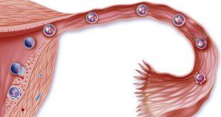 أعراض الحمل بعد التبويض ب5 ايام